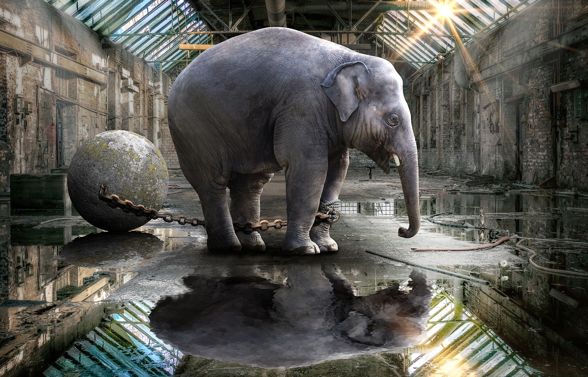 The Baby Elephant Syndrome | The invisible chain