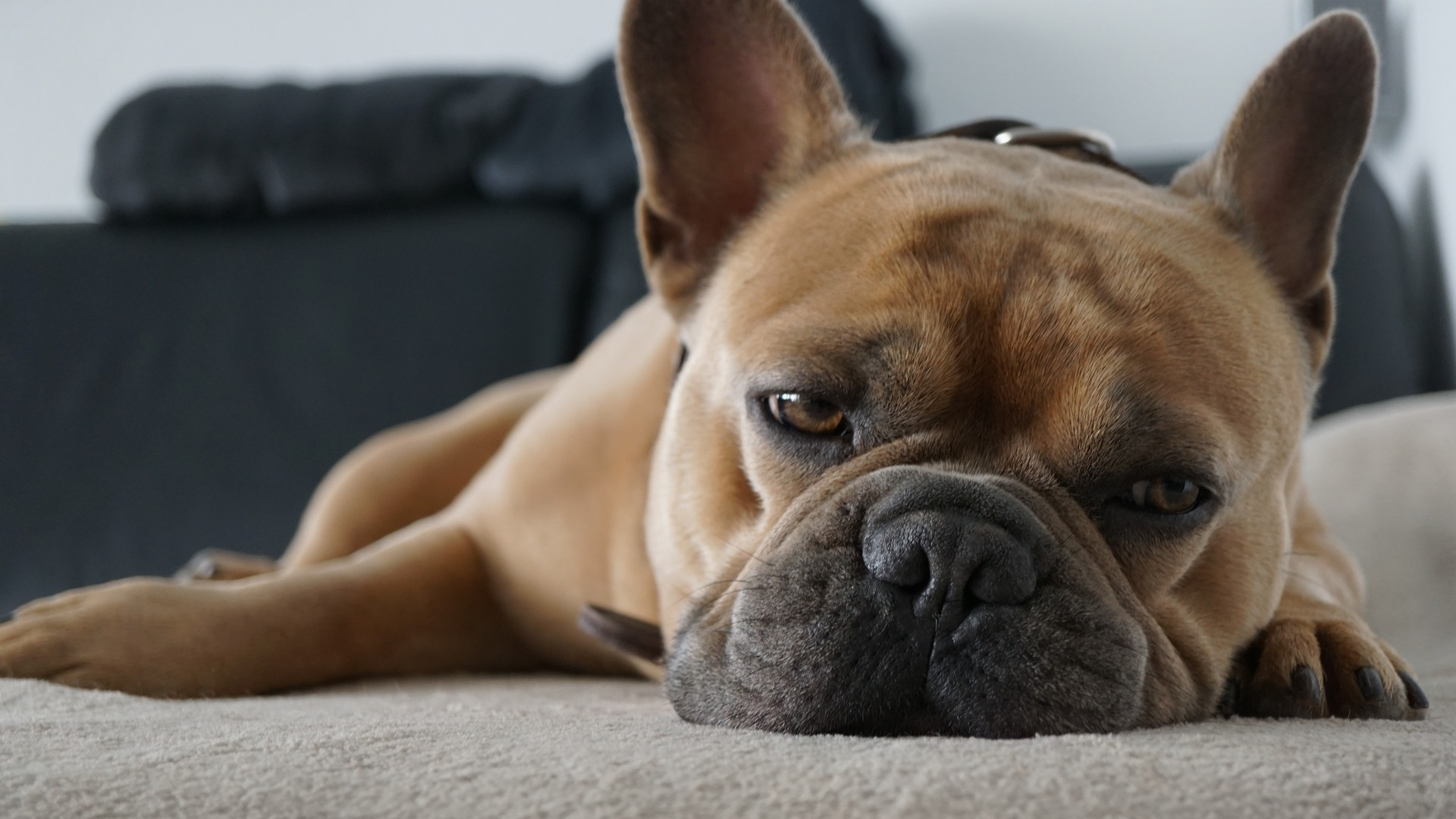 Read more about the article Why do we feel bored?